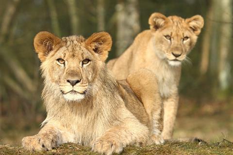 Danhostel Givskud Zoo