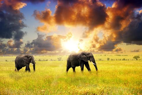 16-daagse safari Selous