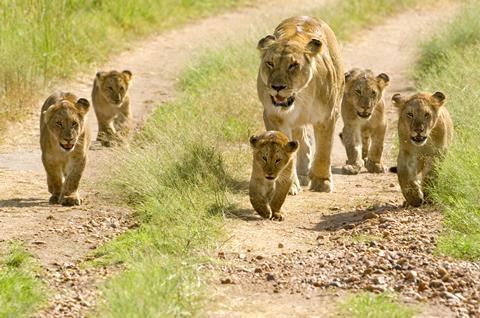 9-daagse safari Selous
