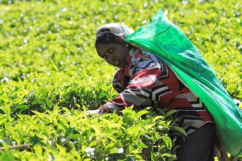 17-dgs groepsrondreis Vele gezichten van Sri Lanka
