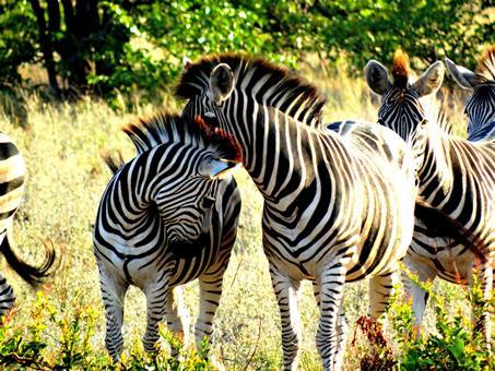 10-daagse rondreis Kruger Park & Swaziland