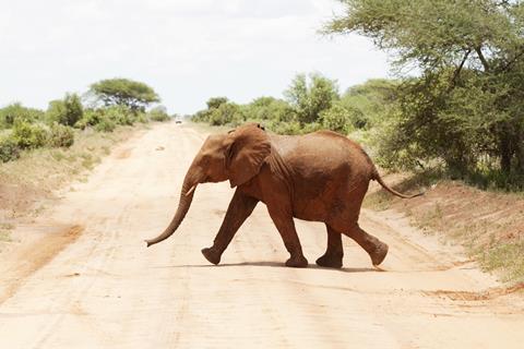 9-daagse safari Shimba Hills Kenia   sfeerfoto 1
