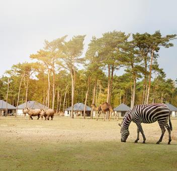TOP DEAL autovakantie Noord-Brabant 🚗️Safari Resort Beekse Bergen
