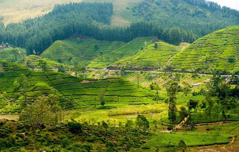 13-daagse rondreis Beste van Sri Lanka incl. RIU