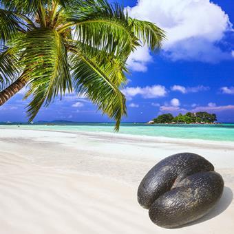 13 daagse Eilandhoppen Seychellen