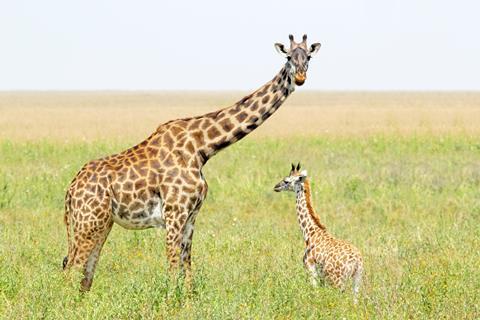 9-daagse safari The Mombasa Rendez Vous Kenia   sfeerfoto 3