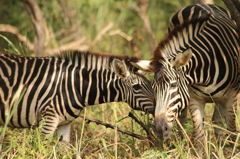 8-dg combinatiereis Fathala Wildlife Experience Gambia   sfeerfoto 3