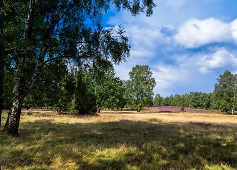 Last minute autovakantie Nedersaksen 🚗️Eurostrand Resort Lüneburger Heide