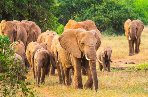 9-daagse safari Taita Hills Experience