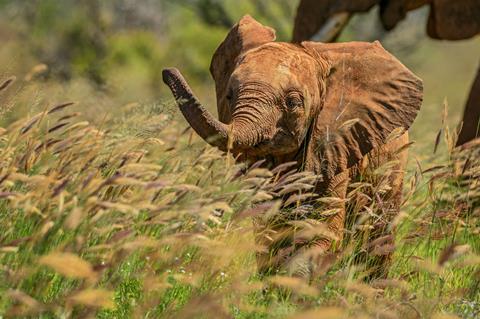9-daagse safari Tsavo & Taita