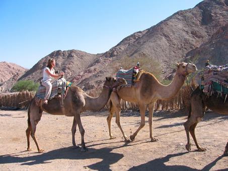 10 daagse fly drive Israël, kibboetsen woestijn