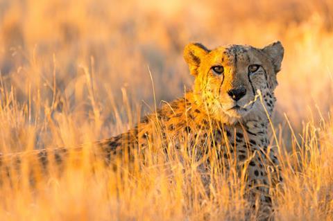 17-daagse rondreis Highlights van Namibie