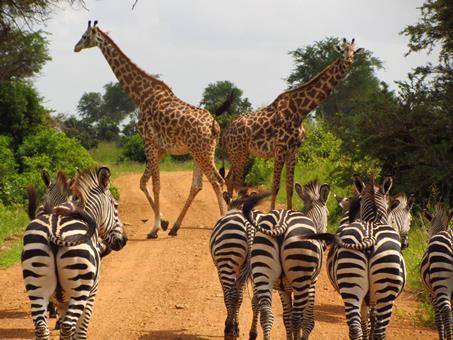 Sfeerimpressie 12-daagse Rondreis Wildparken van Tanzania