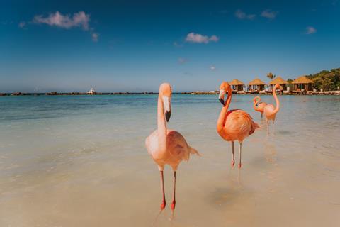 Renaissance Aruba Resort & Casino Aruba Aruba Oranjestad sfeerfoto 4