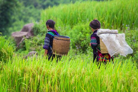 20-daagse rondreis Vietnam Compleet