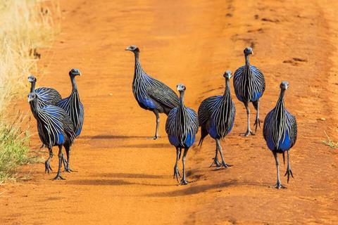 9-daagse safari The Mombasa Rendez Vous Kenia   sfeerfoto 2