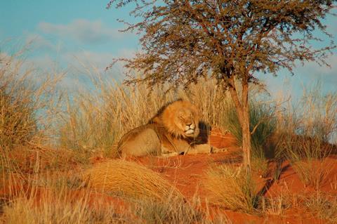 17-daagse rondreis Highlights van Namibië
