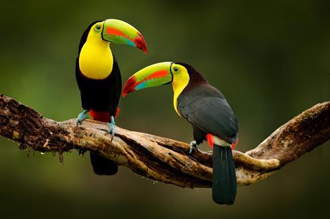 16-daagse familiereis Costa Rica