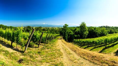 8-daagse rondreis fietsen in Friuli
