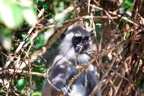 16-daagse individuele rondreis Sri Lanka Delu