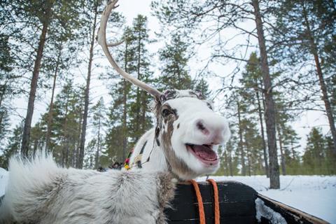 8 daagse rondreis Best of Lapland