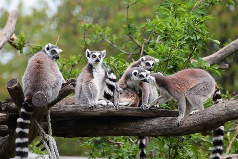 18-daagse rondreis Tropisch Madagaskar