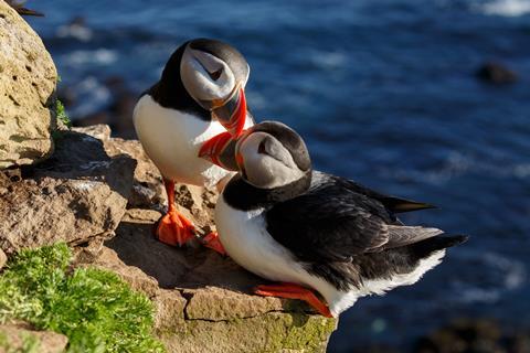 15-daagse Vakantie naar 15 dg cruise Schotland, IJsland & Noorwegen in