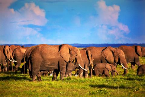 9-daagse safari The Mombasa Rendez Vous Kenia   sfeerfoto 4