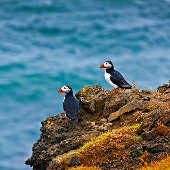 5-dg rondreis Magisch IJsland & het Noorderlicht IJsland   sfeerfoto 1