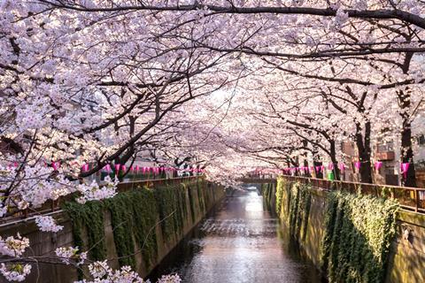 9-daagse combinatiereis Tokyo - Kyoto
