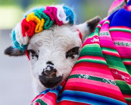 15-daagse familiereis Inca's in kleurrijk