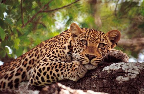 16-daagse safari Best of Tanzania (incl. Zanzibar)