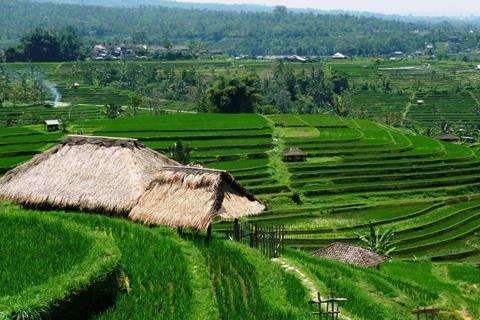 21-daagse rondreis Bali - wandelen